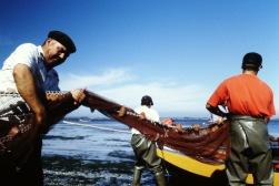 Pesca17